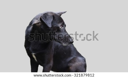 A dog without one eye in desperate need of help, adopt lonely dog isolated on light grey background with lot of empty space