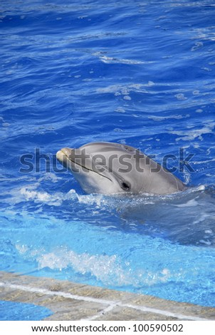 A dolphin with the head out of the water - stock photo
