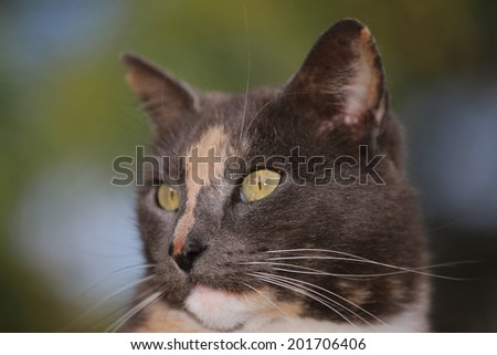 A domestic Cat Looking for its Next Meal. - stock photo