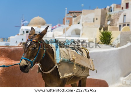 A Donkey Used For Carrying Tourists Up From The Harbour At Fira, Santorini, Greece - stock photo
