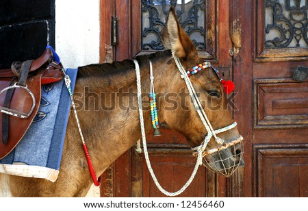 A donkey waiting for tourists wanting a ride to the harbour, standing beside a door in Fira, Santorini, Greece - stock photo
