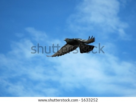 A dove - stock photo