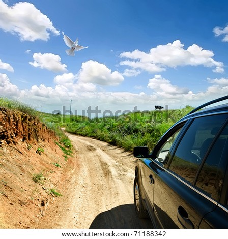 A dove and a car on a rural road - stock photo