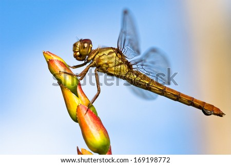 a dragonfly takes a moment to rest on top of a flower - stock photo