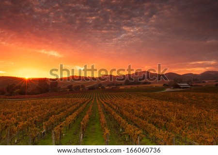 A dramatic sunrise over the vineyards of world famous Napa Valley in Autumn.  - stock photo