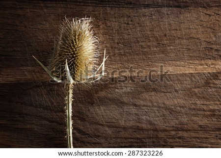 A dried flower on a wooden background. - stock photo