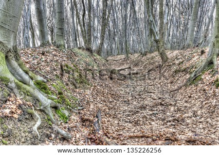 a dried river in autumn forest - stock photo