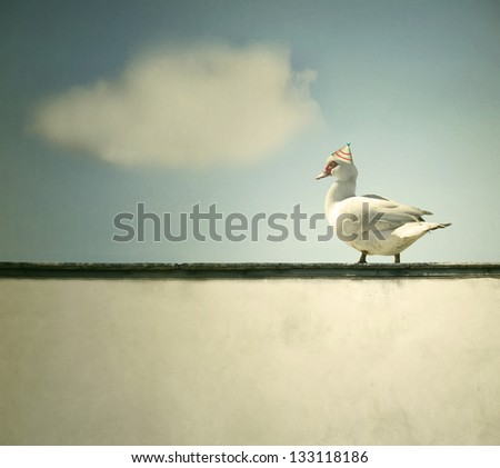 A duck walking on the ledge of the wall with sky and a cloud on the background - stock photo