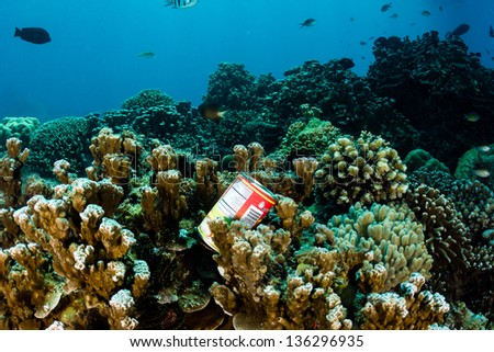 A dumped metal food can rests on hard corals on a tropical reef