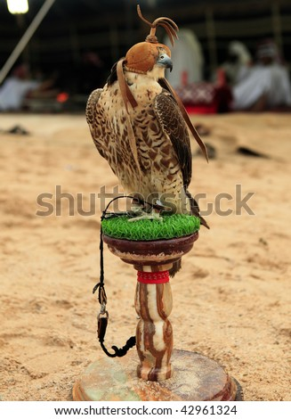 A falcon sits on its stand at a desert camp in Qatar, Arabia, while (out of focus) Arabs in Gulf robes relax in the traditional tent behind. - stock photo