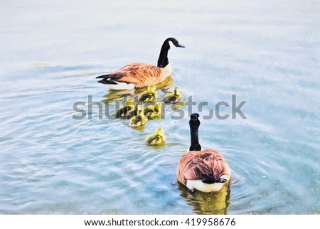A family of Canada Geese are swimming together as a family for the first time. The goslings are two days old. This is computer generated art from a photograph.  - stock photo