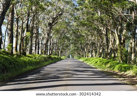 A famous landmark in Kauai Hawaii is a long tree tunnel in a rural part of the island. - stock photo