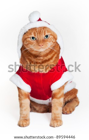 A fat orange Tabby cat sitting down and wearing a red and white Santa suit - stock photo