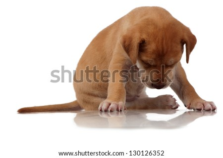 A fatigued puppy closes its eyes whilst still in the sitting position. - stock photo