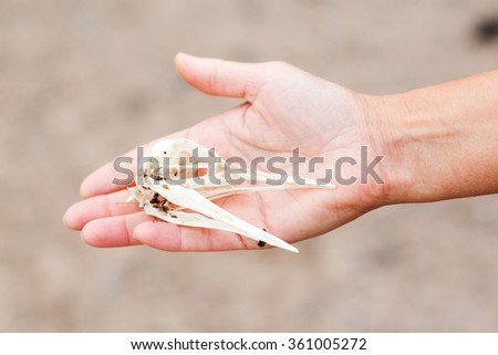 A female hand is holding a bird skull / cranium that was found on the ground.