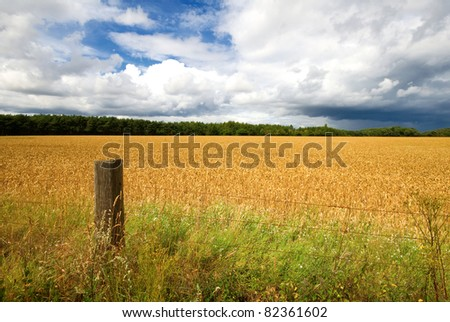 a fence post and an english hay field in summer - stock photo