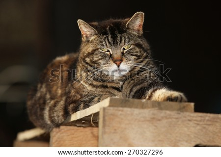 A Feral Cat Sleeping Outside on a Shipping Crate - stock photo