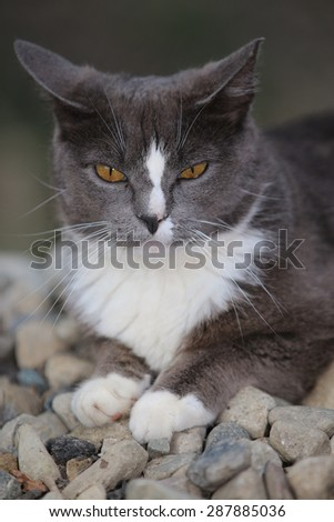 A Feral Cat with Intense Yellow Eyes Sleeping on a Warm Pile of Stones - stock photo