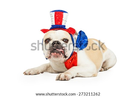 A festive looking Bulldog with tongue hanging out of the side of its mouth wearing American red white and blue hat and bowtie