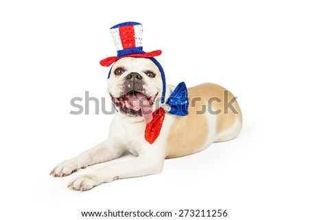 A festively dressed Fourth Of July Bulldog laying at an angle.  Dog is wearing at top hat and bow tie.