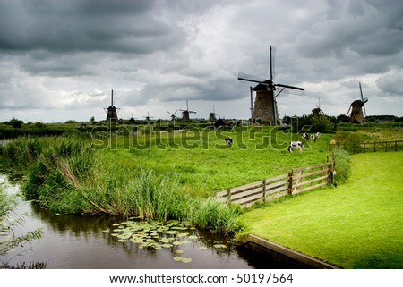 A few dairy cows grazing in a field in front of multiple windmills - stock photo