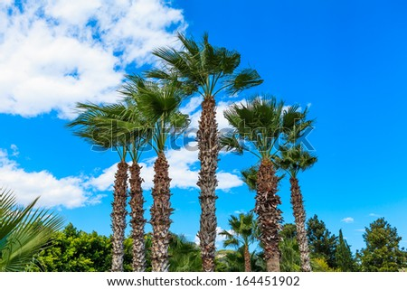 A few green palms on a background the sky and clouds - stock photo