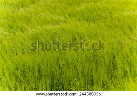 a field as green as grass can get - stock photo