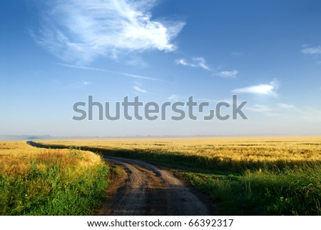 a field at the sunrise in summer - stock photo