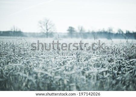 A field covered in frost during the winter. - stock photo