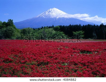 A field of beautiful red Azaleas with Mount Fuji - stock photo