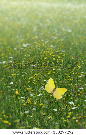 A field of flowers in its blooming height with some butterflies in harmony in strong depth of field focus. - stock photo