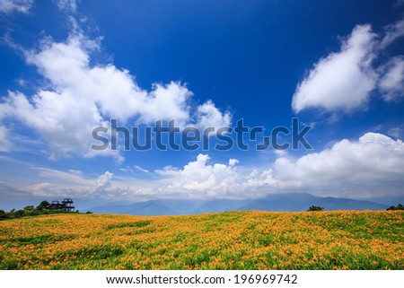 A field of orange and green with a bright sky and clouds. - stock photo