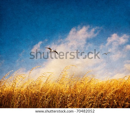 A field of tall, brown Veldt grass with fog and seagulls on a windy day.  Image has a nicely textured and grained paper overlay. - stock photo