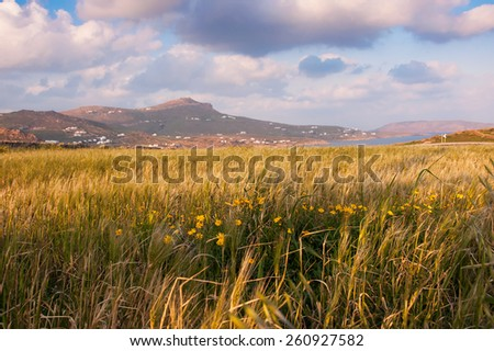 A field of wheat at sunset with beautiful clouds. - stock photo