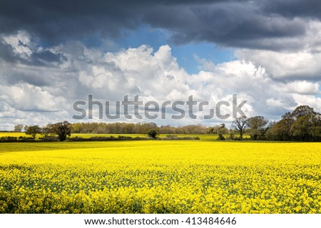 A field of yellow rape or canola flowers, grown for the rapeseed oil crop. Late spring in Micheldever, Hampshire, UK - stock photo