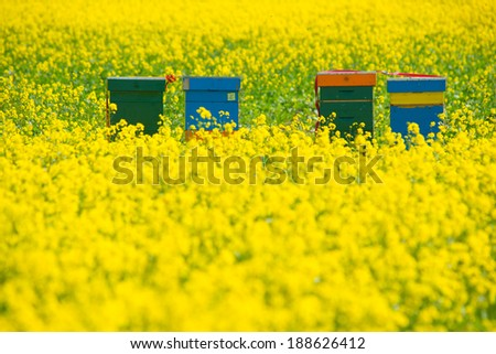a field with flowers and beehives
