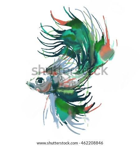 A Fighting fish painting on white background