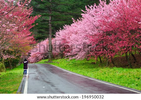 A figure by the side of a road bordered by flowering trees.