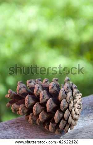 A Fire Cone - stock photo