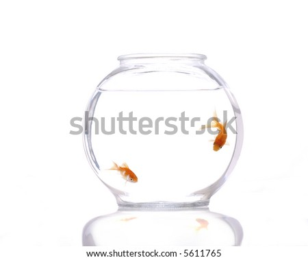 A fish bow with two fish against a clean, white background. - stock photo