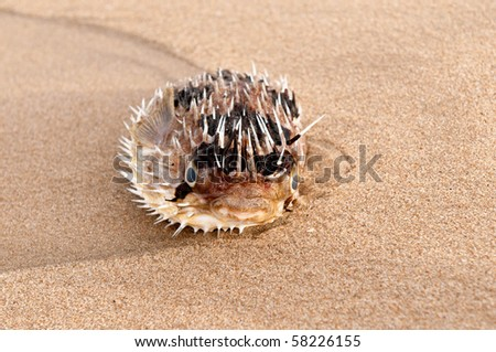 A fish lying dead by the shores of a tropical beach - stock photo