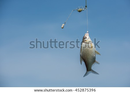 A fish rise to the bait