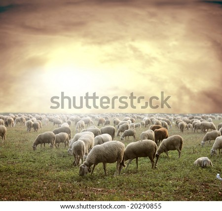 a flock and a sunset - stock photo
