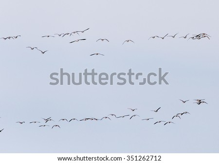 a flock of birds in the sky - stock photo