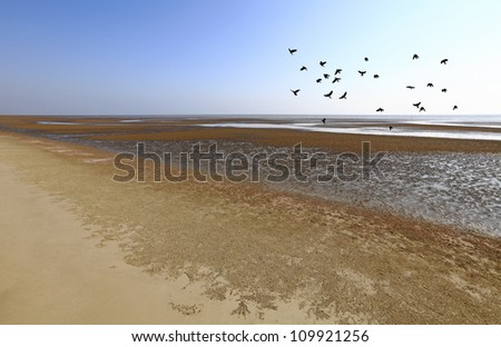 A flock of black birds flying across a golden sandy beach during low tide. - stock photo