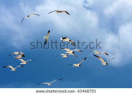 A flock of Caribbean seagulls flying over a  blue sky. - stock photo