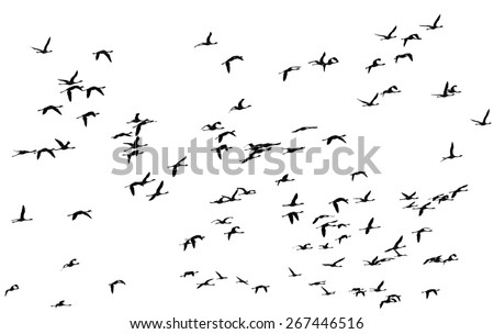 A flock of flamingos flying over the coast of the ocean - Namibia, South Africa - stock photo