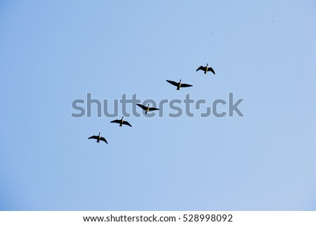 A flock of migratory birds flying in the sky