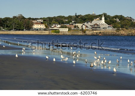 A flock of sea gulls scattered along lynn beach in lynn massachusetts, in the background is the town of swampscott - stock photo