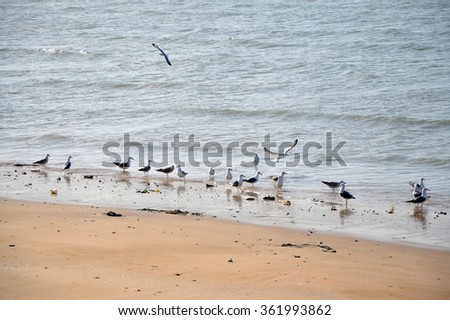 A flock of seagulls on a beach, Persian gulf, Iran